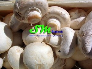 mushroom machines