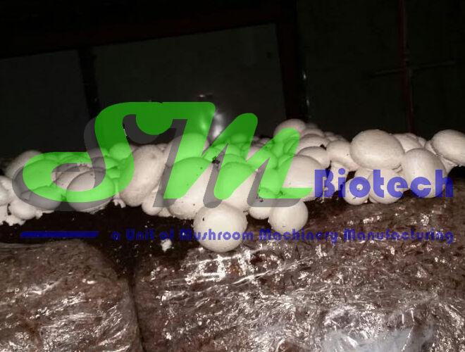 Jind Mushroom Farm
