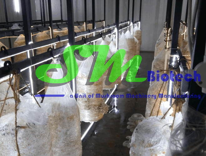 Gurgaon Oyster Mushroom Plant_Inside Image of Mushroom Growing Room