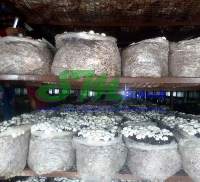 Mushroom Flush inside Growing Room2