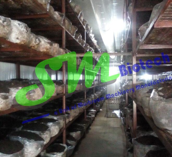 Mushroom Growing Room Inside View1