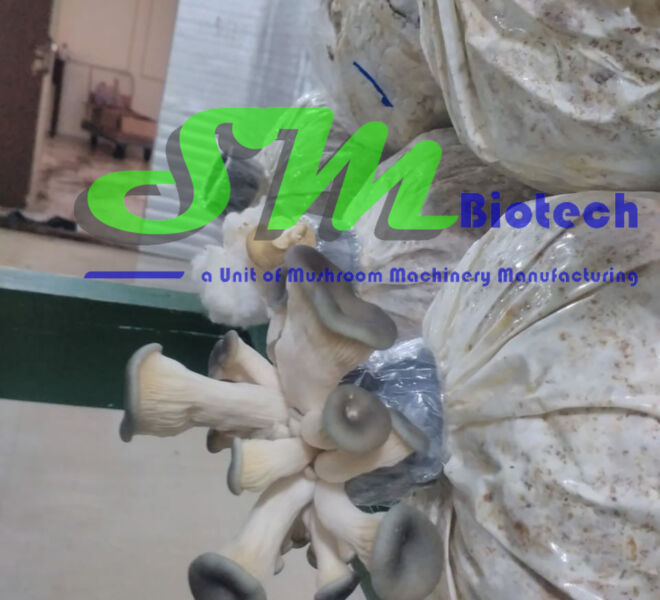 Oyster Mushroom Flush Image 2_Bahrain Project